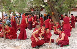 Debating Monks of Sera Monastery